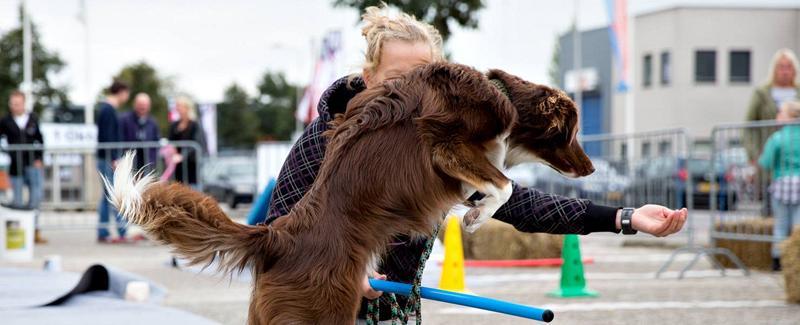 Pets Academy leerzame activiteiten